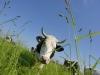 Et si l'élevage sauvait la planète ?