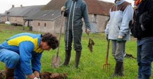 Premiers pas vers l'agroforesterie à La Guilbardière