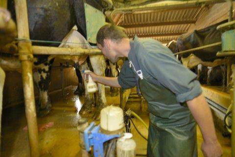 Nettoyage du pis de la vache