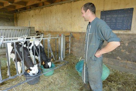 Veaux qui boivent le lait de leur mère