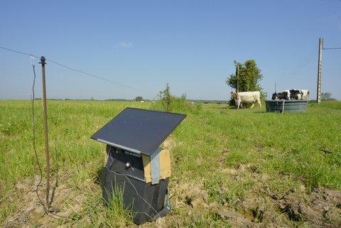 Clôture électrique pour vaches