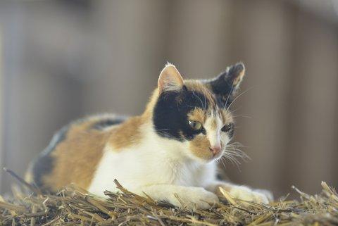 Chat à la ferme bio