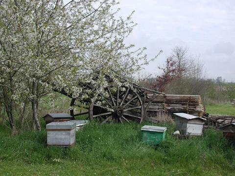 les ruches pour du miel bio